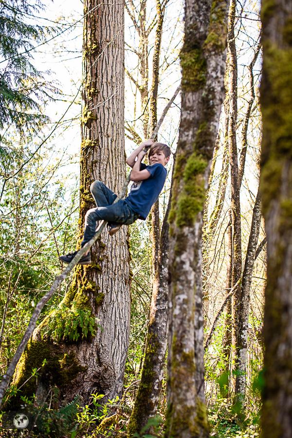 A boy climbing a tree.