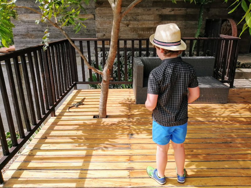 Noah spots a lizard on the decking