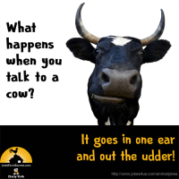 What happens when you talk to a cow? It goes in one ear and out the udder!