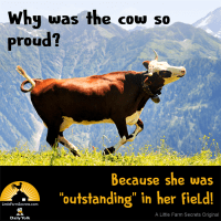 """Why was the cow so proud? Because she was """"outstanding"""" in her field!"""