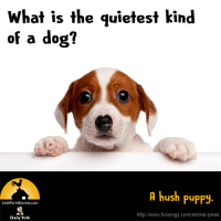 What is the quietest kind of a dog? A hush puppy.