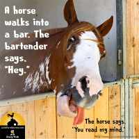 "A horse walks into a bar. The bartender says, ""Hey."""