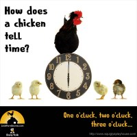 How does a chicken tell time? One o'cluck, two o'cluck, three o'cluck...