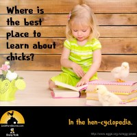 Where is the best place to learn about chicks? In the hen-cyclopedia.