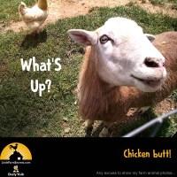 What'S Up? Chicken butt!