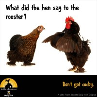 What did the hen say to the rooster? Don't get cocky.