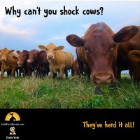 Why can't you shock cows? They've herd it all!