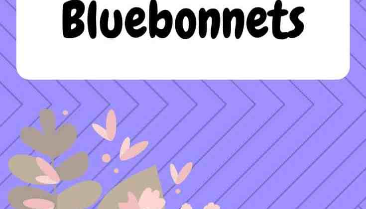 6 Facts About Bluebonnets