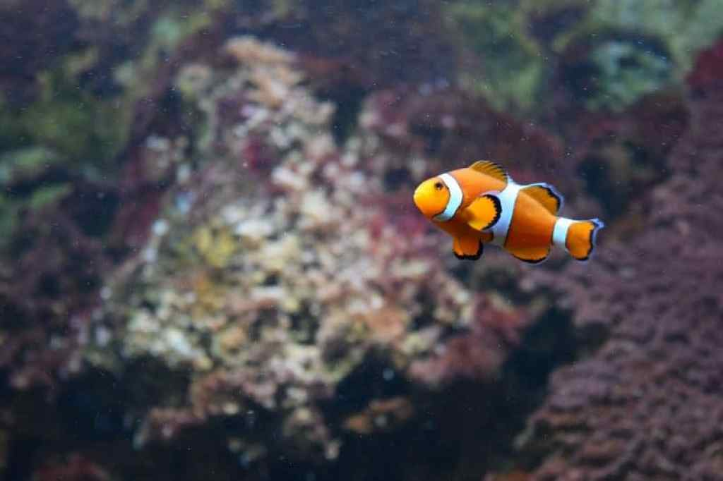 Lessons we learn from Disneys Finding Nemo
