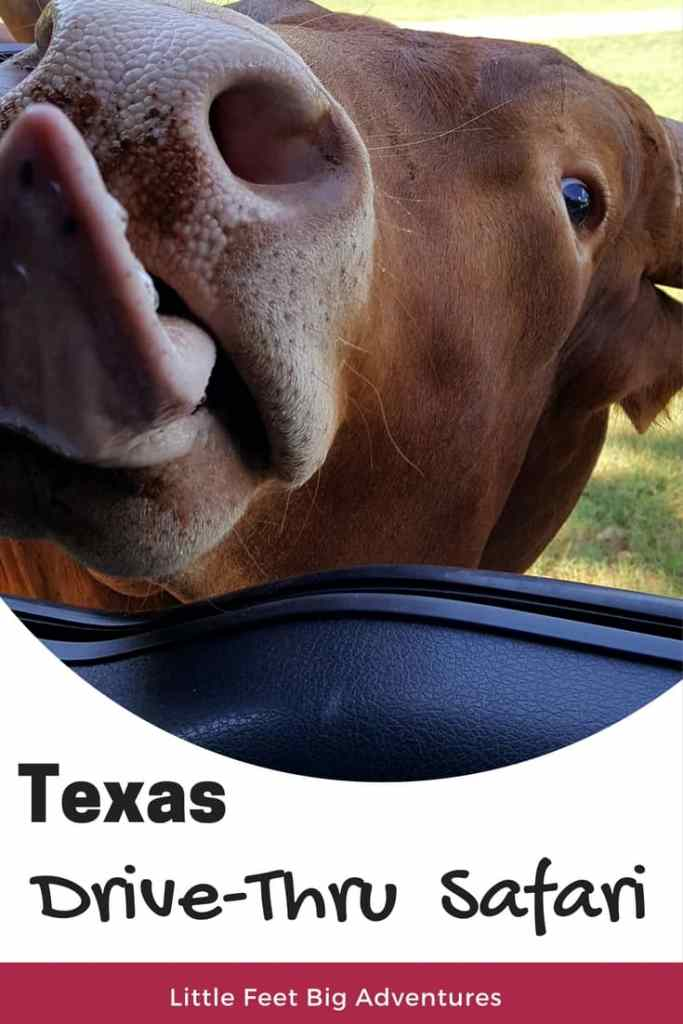 East Texas Drive-Thru Safari