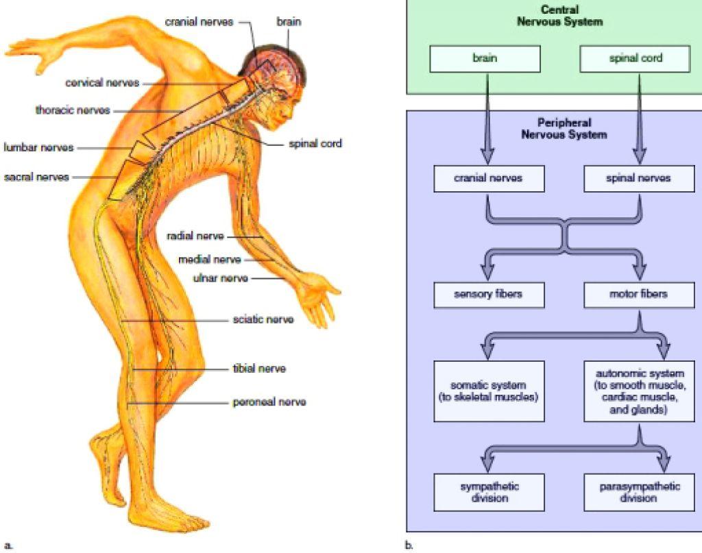 Nervous System Side Effects In Childhood Cancer