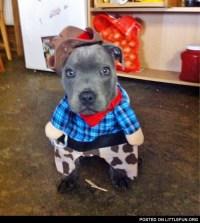 LittleFun - Dog in a cowboy costume