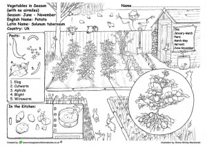 Educational Green Gardening Colouring Pages
