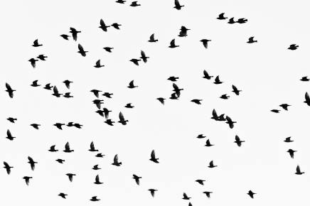 animals-birds-black-and-white-1386454