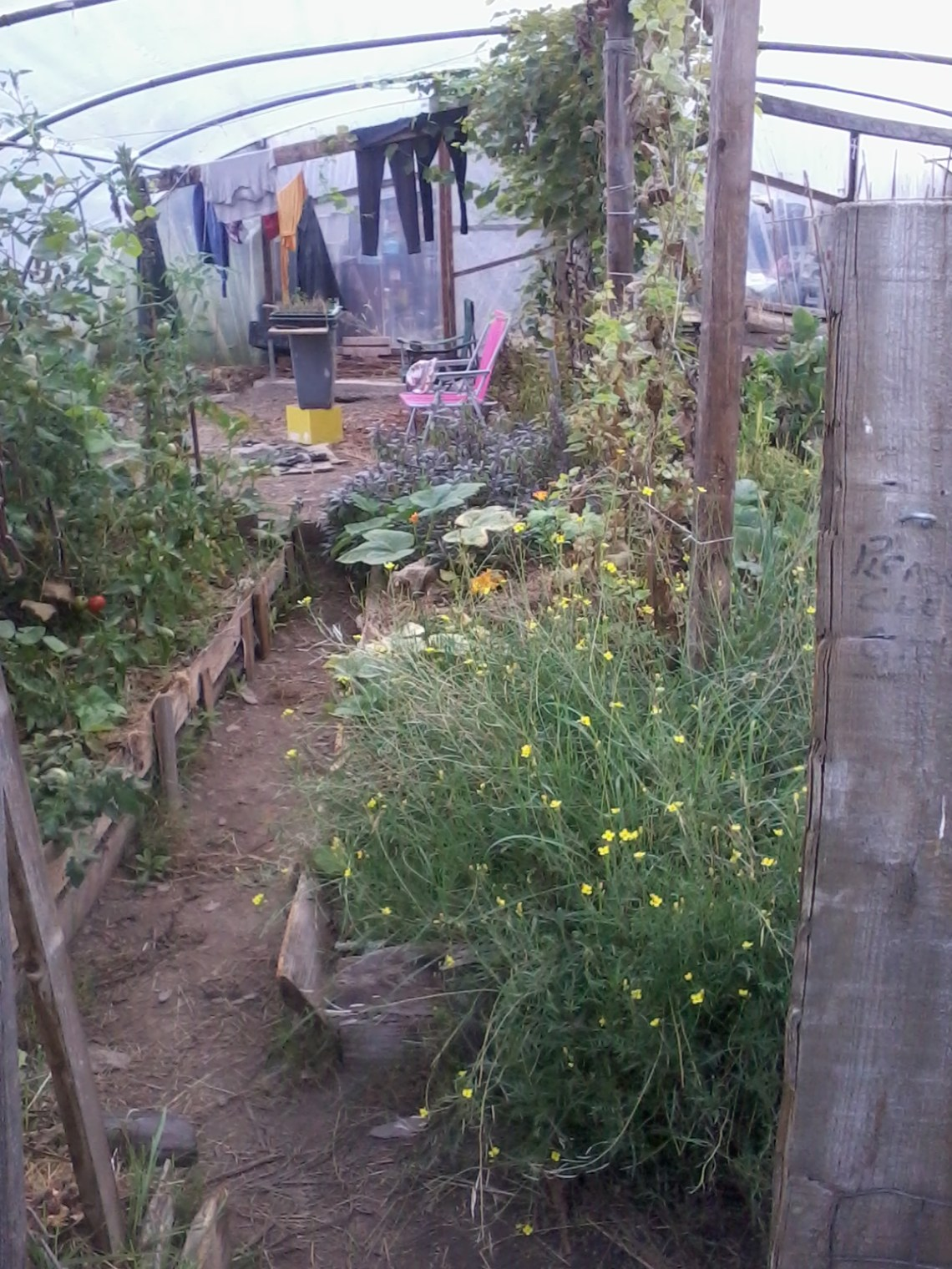 The polytunnel on the vegan permaculture farm