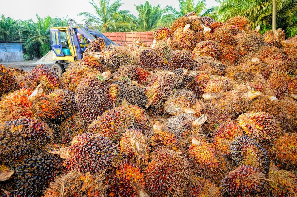 Can Palm Oil Really Be Sustainable?