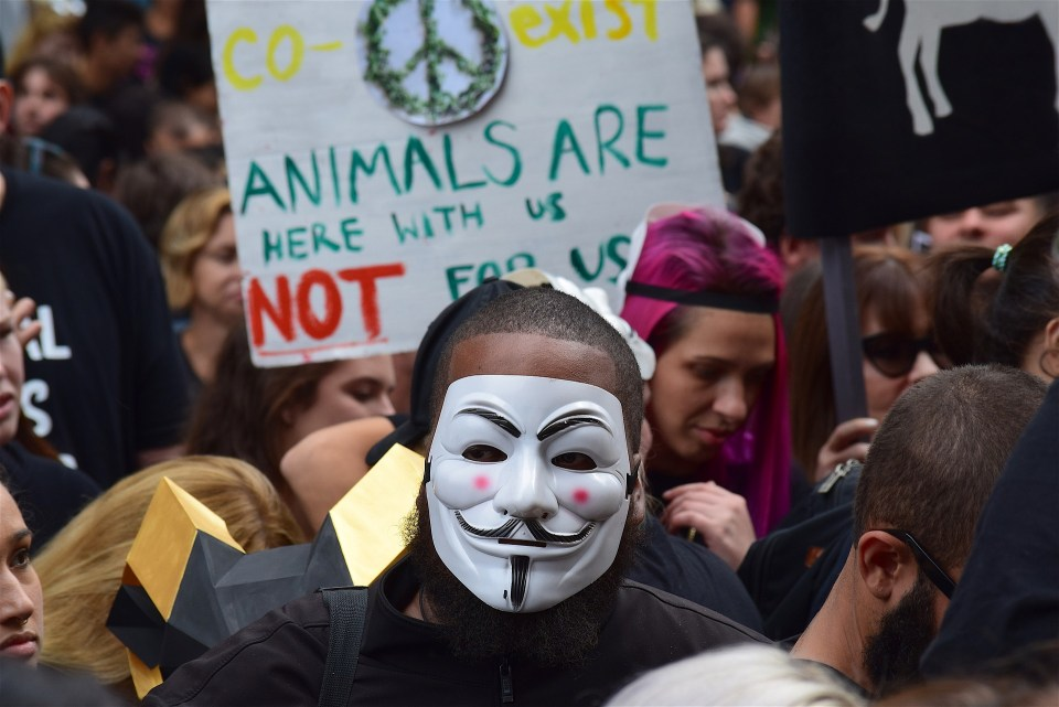 Vegan Activism: Why Anyone Can Get Involved!