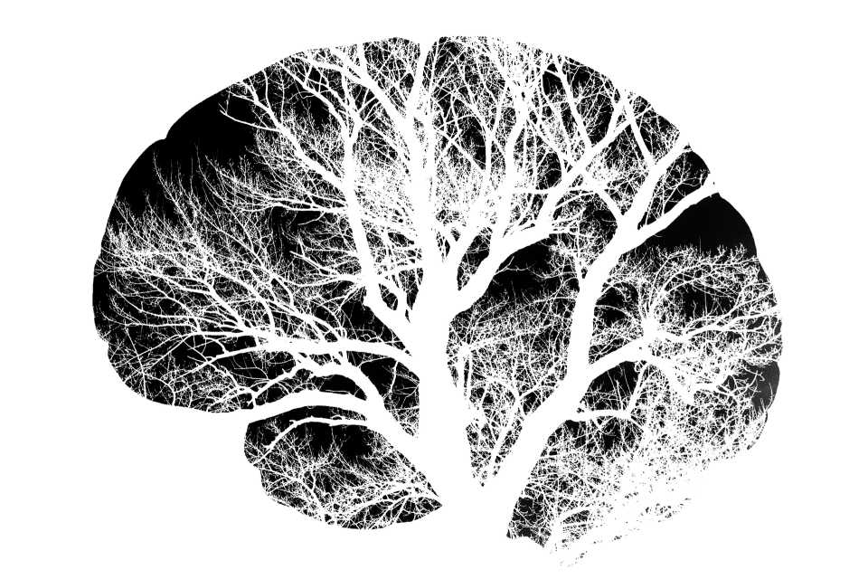 Your Brain on Plants: Cognition-Boosting for Vegans
