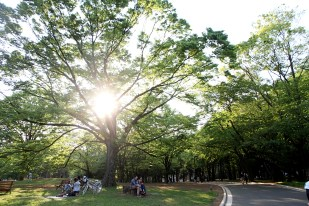 Yoyogi Park on a Sunday