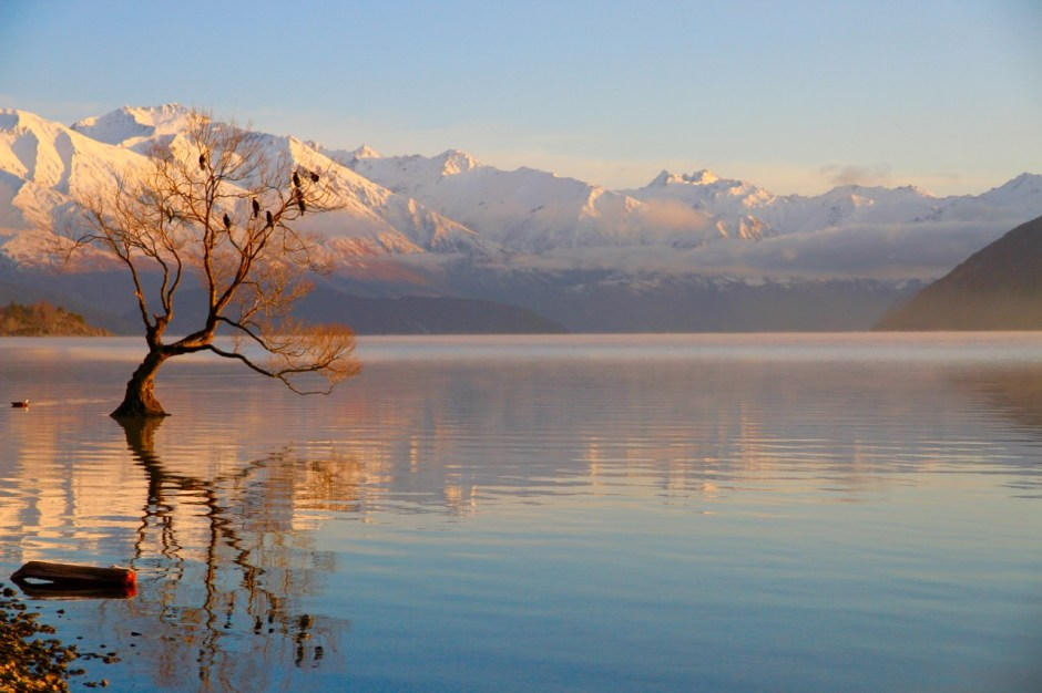 That Wanaka Tree Lake Wanaka Things To Do In Wanaka Travel Blog