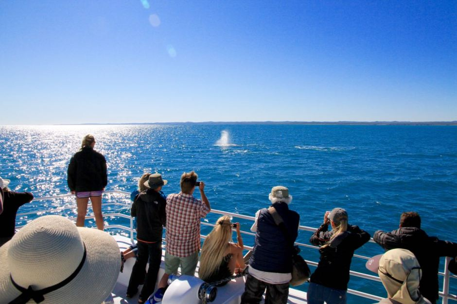 Whale Spotting Phoebe Lee 14 Reasons you should go whale watching in Hervey Bay Travel Blog