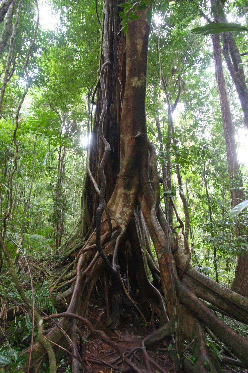 Must-know tips for exploring the Mossman Gorge