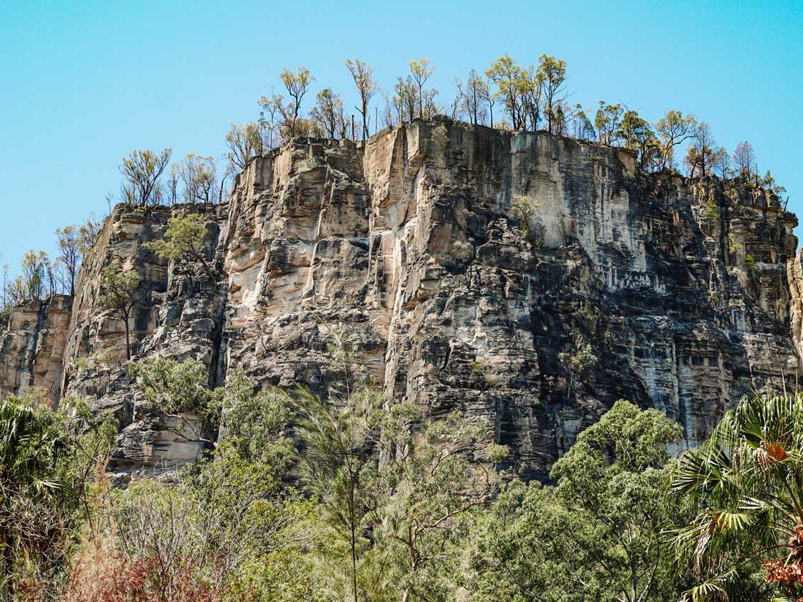 Carnarvon Gorge © Little Grey Box