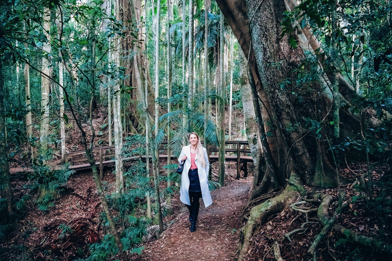 Maiala Rainforest Circuit © Little Grey Box