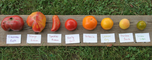 2015 tomato varieties