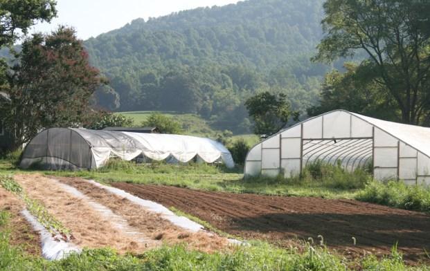 (L) Fall lettuce follows summer squash; (R) freshly seeded former buckwheat field.