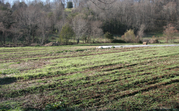 Fuzzy green cover crops keeping our soil alive for the winter