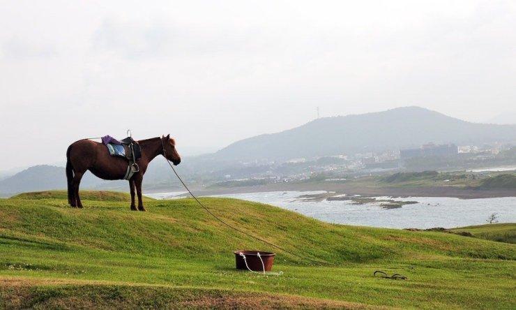 Horse at Seongsan Ilchulbong in Jeju Island