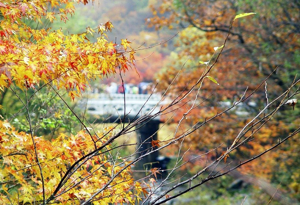Naejangsan in South Korea is home to many secrets – and it's definitely worth finding those out this coming autumn. Spend the fall season hiking in South Korea's gorgeous natural landscapes.
