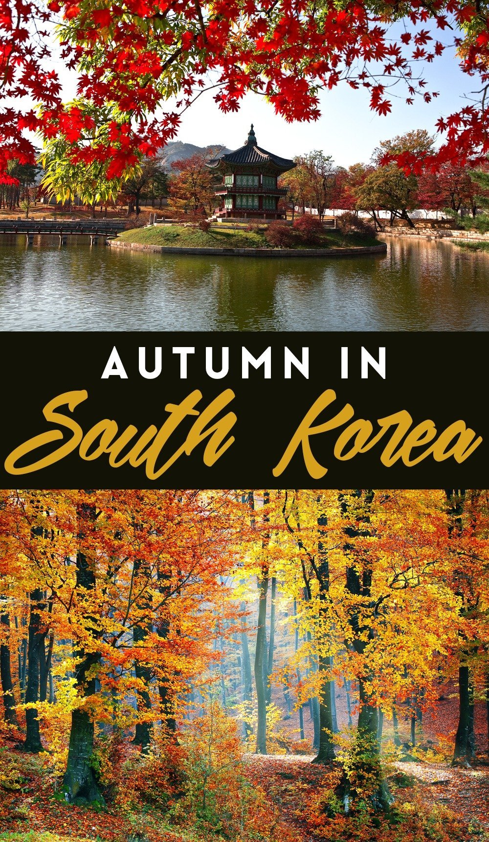 Find the perfect spots in South Korea to see the beautiful colors of fall. Click through to get the perfect guide to spending autumn in South Korea!