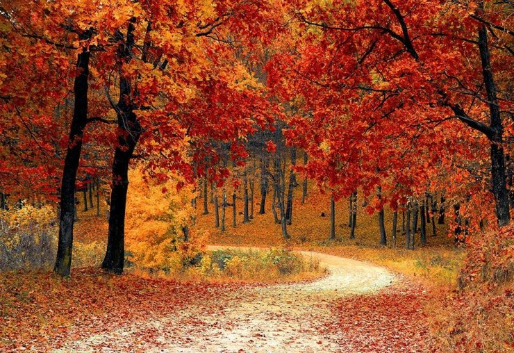 This fall season, try forest bathing! Explore South Korea's many gorgeous forests in and around Seoul!