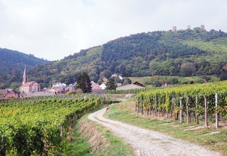 You'll find a lot more than vineyards when you follow the historic wine trails of Alsace. This trail leads to the Les Trois Chateaux, ruins from the 12th century.
