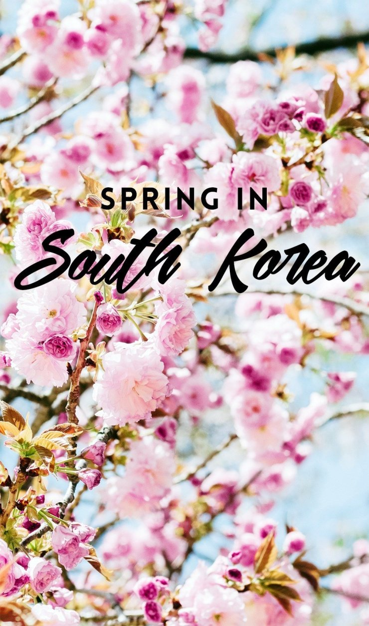 Join the festivities this spring as South Korea dresses in pink! See the gorgeous cherry blossoms and enjoy the vibrant atmosphere. Click through for the best spring destinations in South Korea!