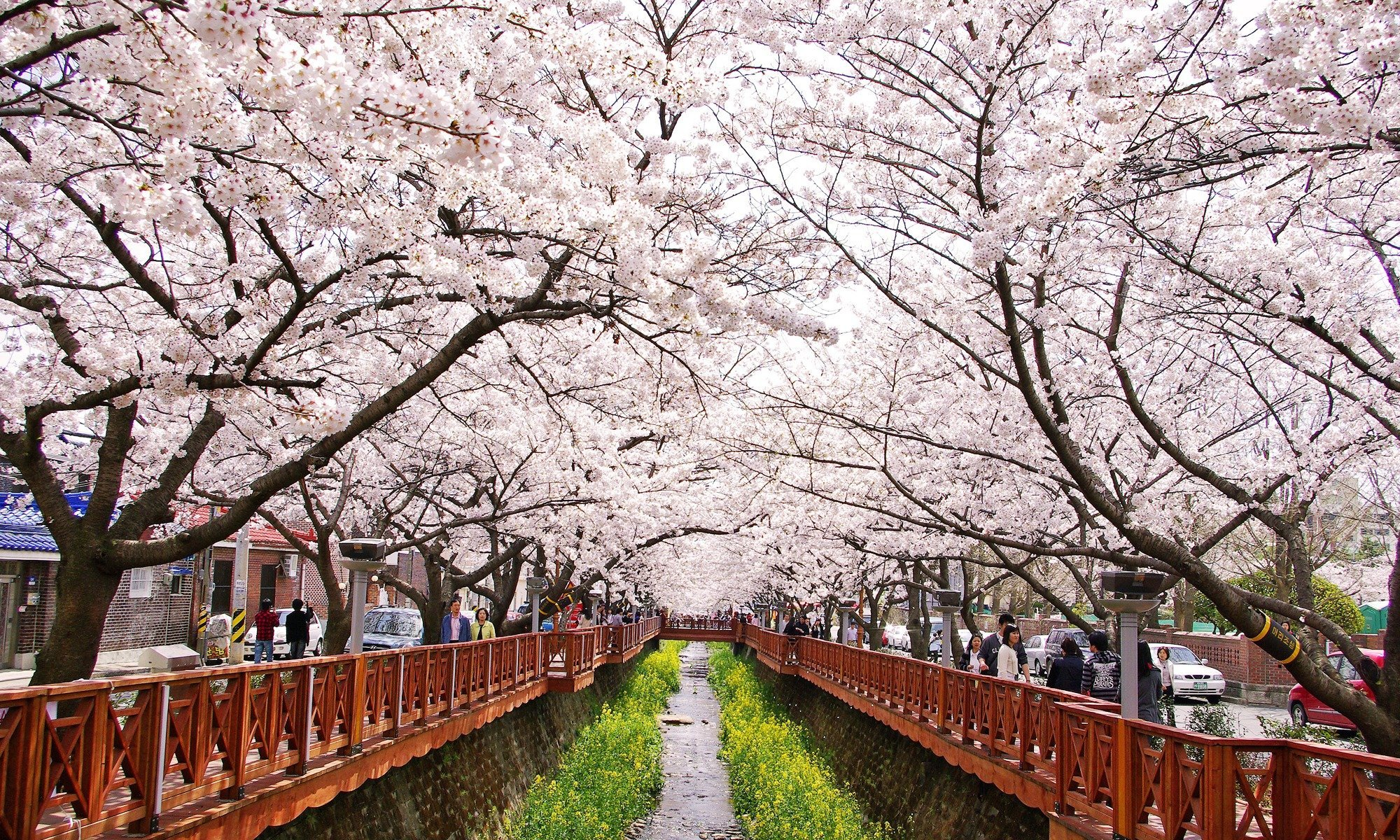 Spring In South Korea When And Where To See The Cherry Blossoms