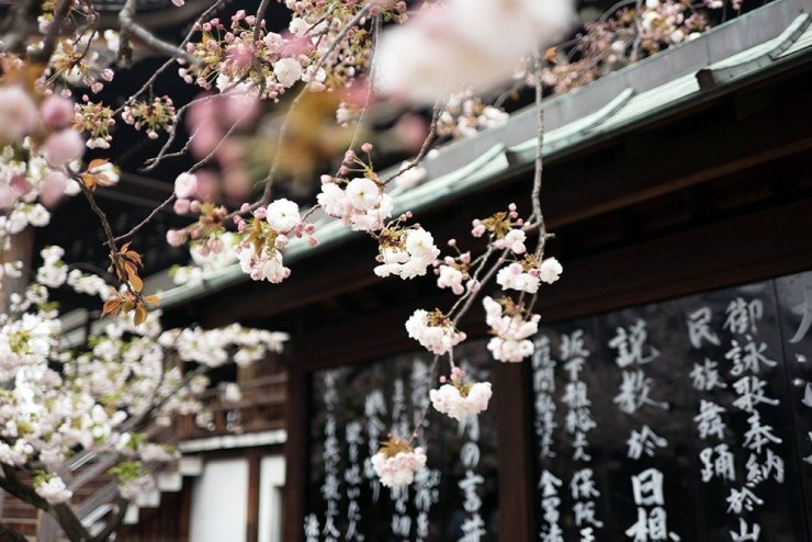Springtime is a busy season in Osaka, when thousands flock to see the beauty of Japan's cherry blossoms. Find the perfect hotel from where to start your flower-viewing – here's where to stay in Osaka for spring.