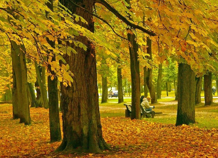 Peaceful tree-lined streets, sprawling gardens, and ornate wooden mansions – couple this with art museums, a Baroque palace, and a choice of luxurious hotels and you're in for one of the most leisurely holidays you can experience in Tallinn. Here's your city break guide and where to stay in Tallinn.