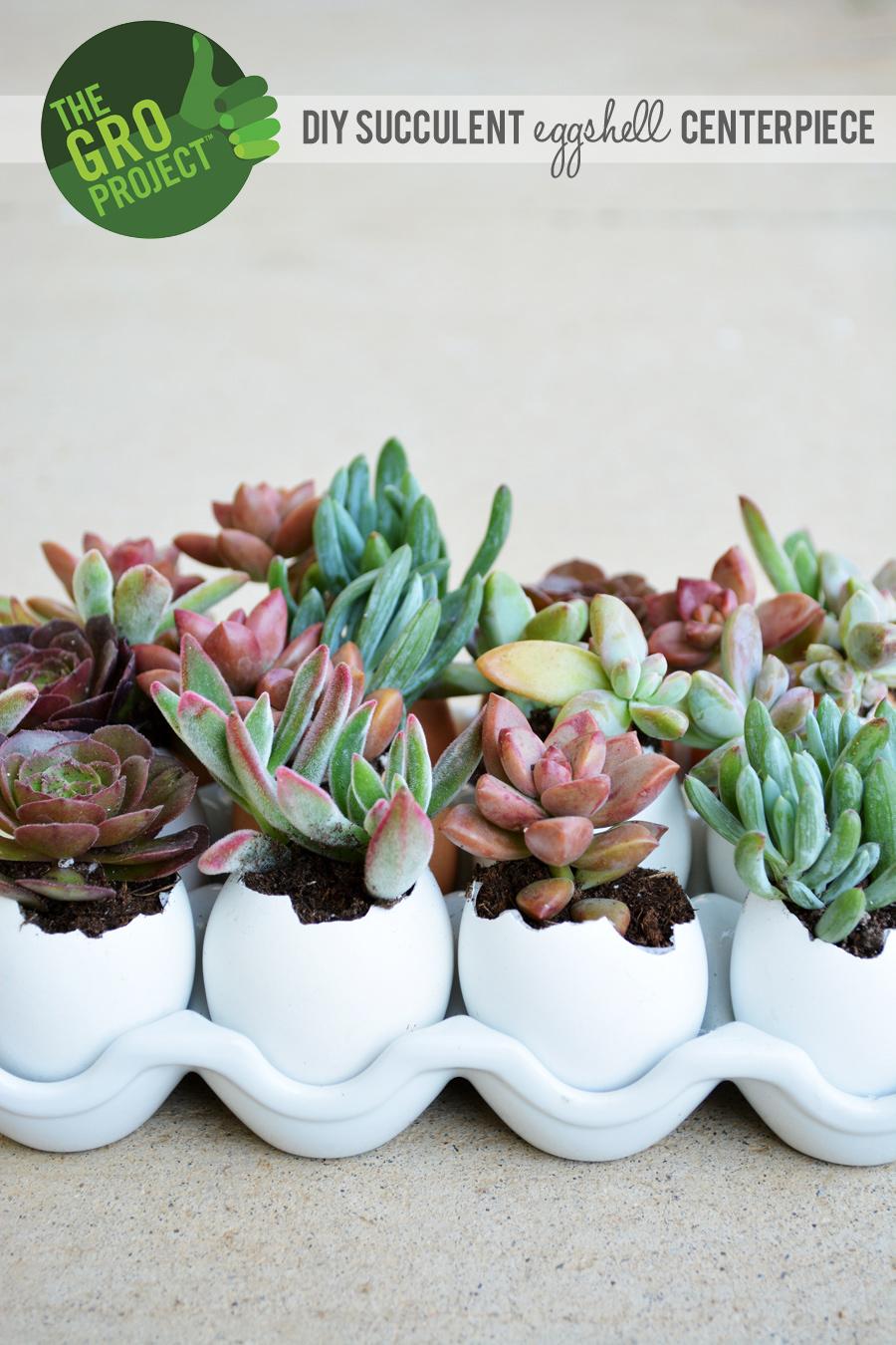 Succulent Eggshell Centerpiece  Little Inspiration