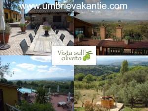 Vista sul'oliveto