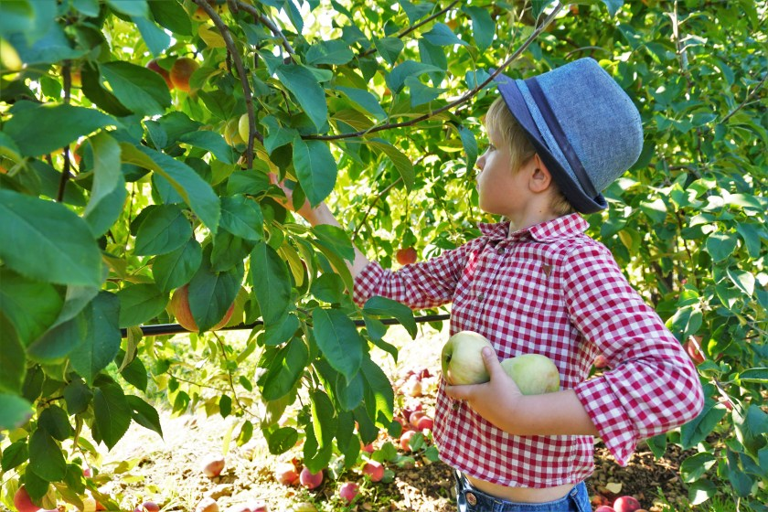 Autumn in the City - Apple Picking at Alstede Farms