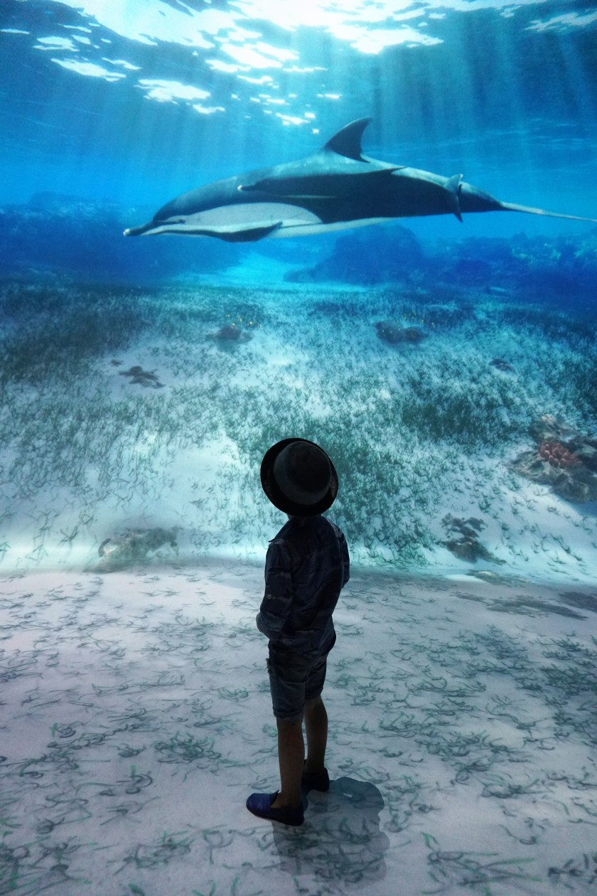 Under the Sea of Times Square: National Geographic Encounter