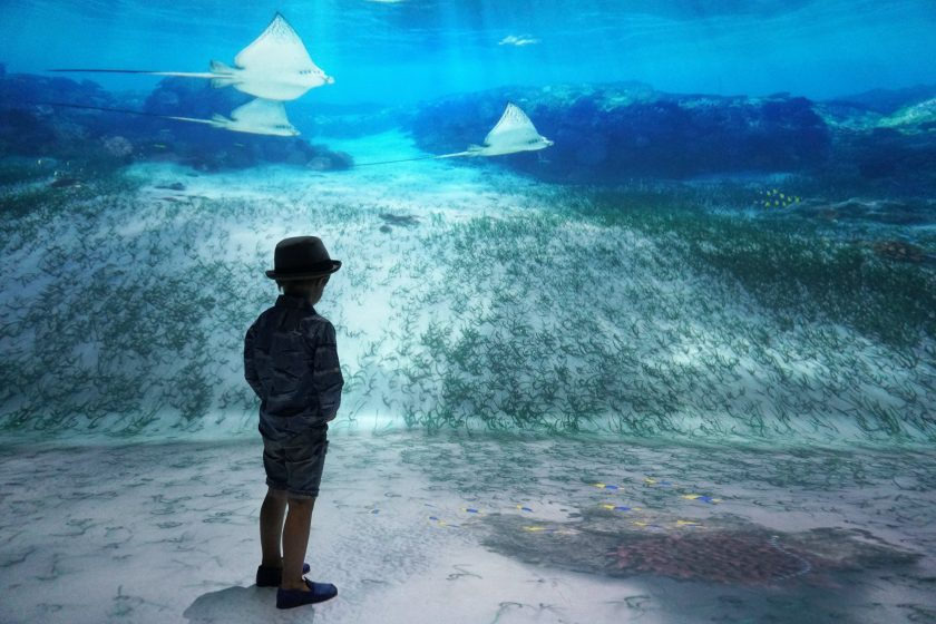 Meeting Sting Rays at National Geographic Encounter Ocean Odyssey