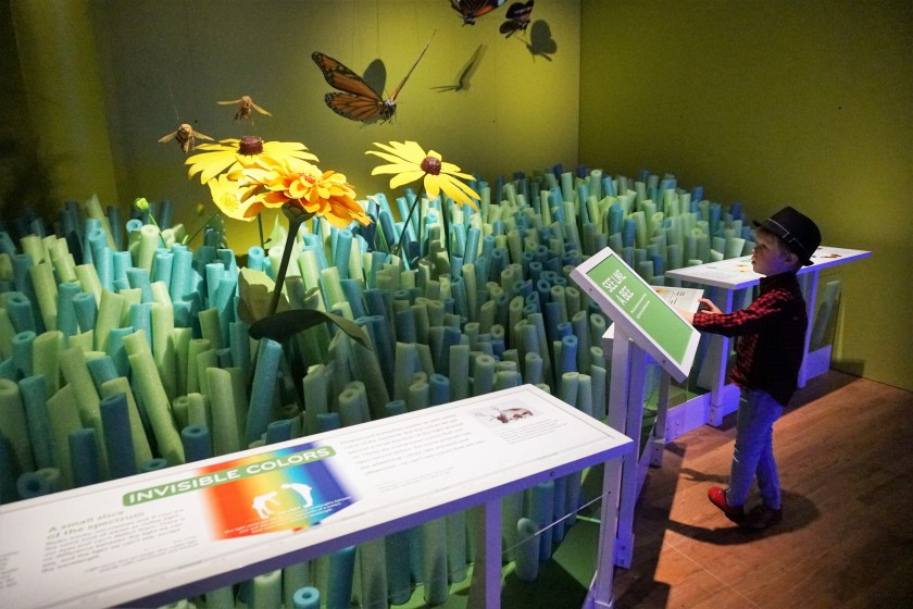 American Museum of Natural History - Our Senses