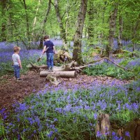 The Last Days of Blue:Arlington Bluebell Walk at Beatons Wood, Sussex (and some other woods, too)