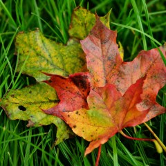 Fall Advice Every Lawn and Garden Expert Should Know