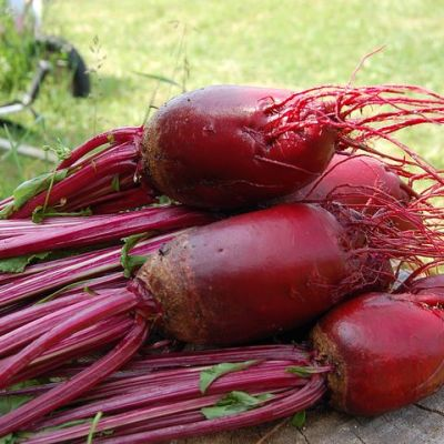 Tips for growing and Preserving Beets