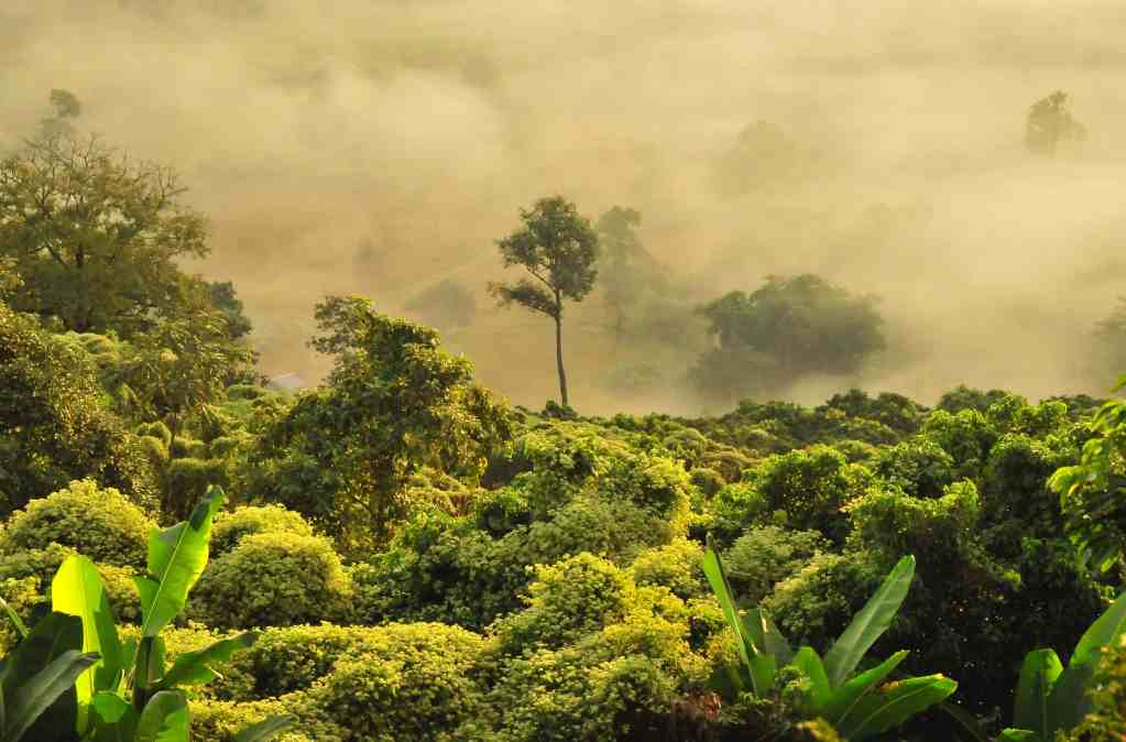 Image of the top of a green jungle in Thailand with fog in the background which carbon offsetting can contribute towards protecting.